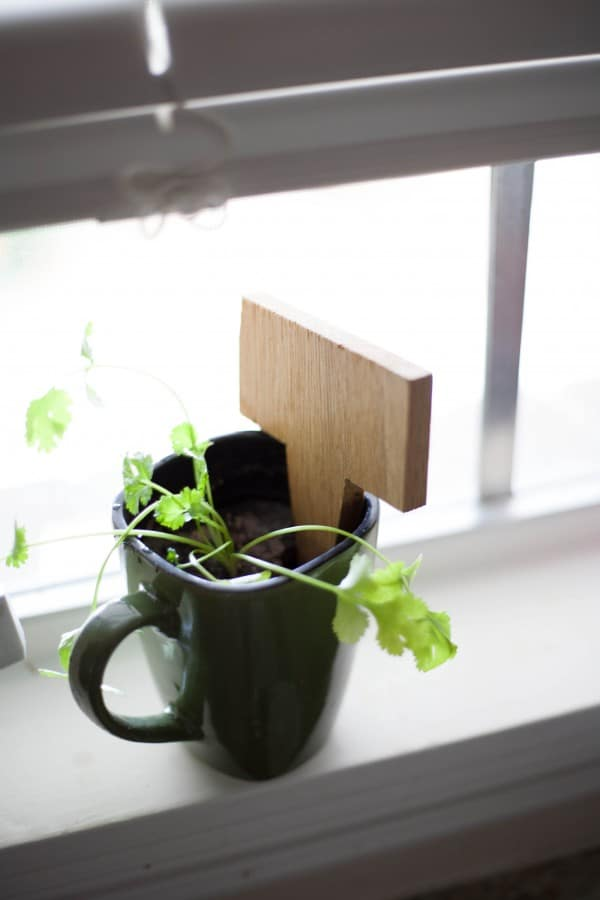 Coffee Mug Herb Garden Update and Giveaway @EclecticEveryday