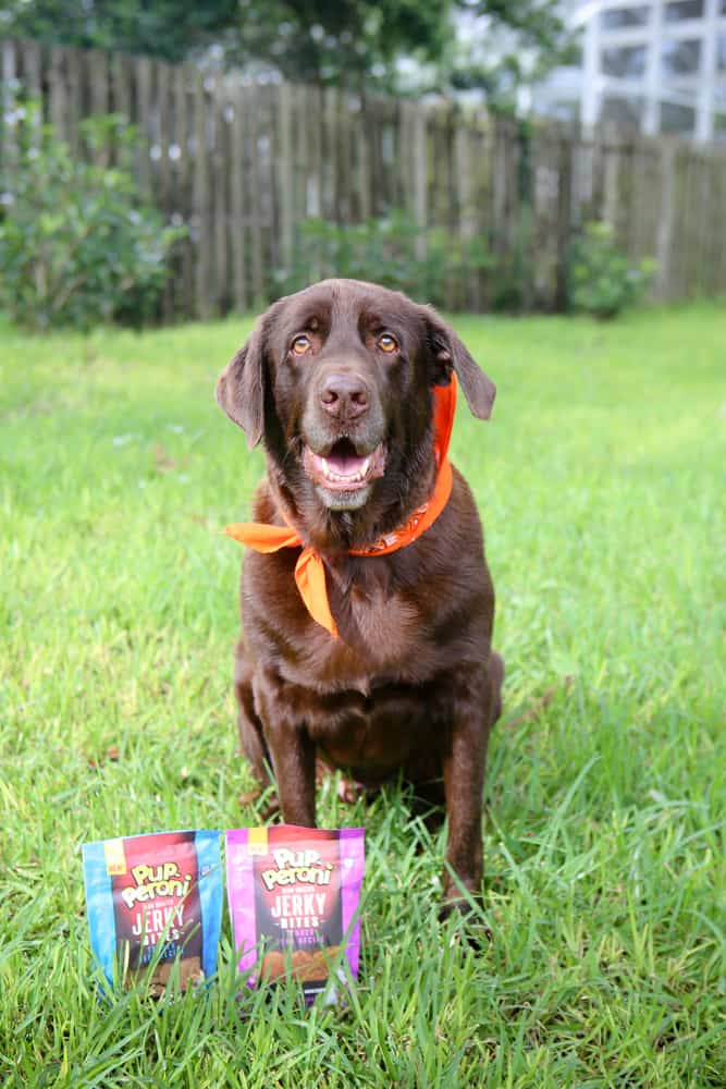 Our Playful & Energetic Coco and His Favorite Treats! @EclecticEveryday