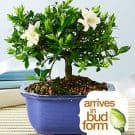 potted plant bonsai
