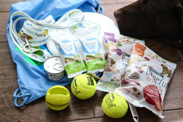 dog food with tennis balls