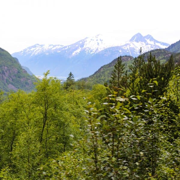 picture of trees and mountain range