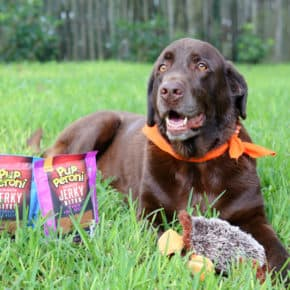 Our Playful & Energetic Coco and His Favorite Treats! by Eclectic Recipes
