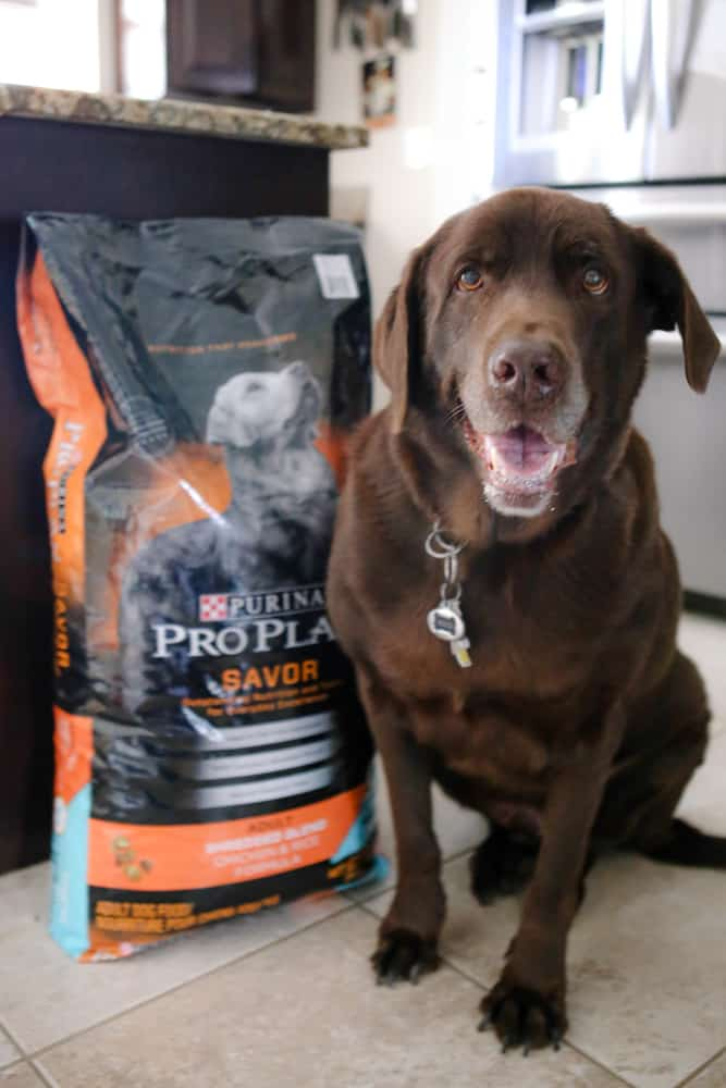 picture of coco by purina dog food
