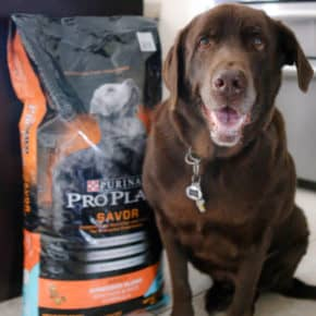 Coco's New Favorite Food - Purina<sup>®</sup> Pro Plan<sup>®</sup> Savor<sup>®</sup> by Eclectic Recipes